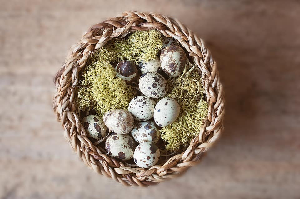 nest full of eggs